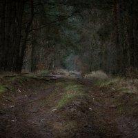 лес :: Данил Крижановский