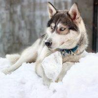 милаха :: Наталья Скипина