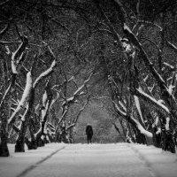 Снег в Коломенском :: Алексей Федотов