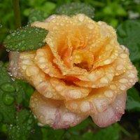 После дождя. :: Oleg S