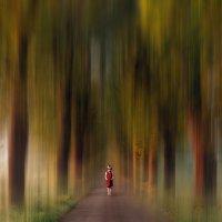 сказочный лес. :: Van Dok