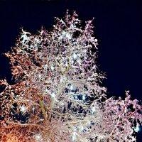 Новогоднее дерево с градусниками :: Кай-8 (Ярослав) Забелин
