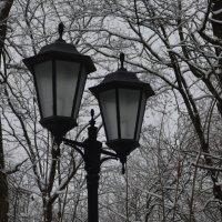 Чёрно-белая зима... :: Владимир Павлов