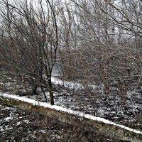 Снежок :: Татьяна Королёва