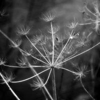 Осень в черно-белых тонах. :: Елена Третьякова