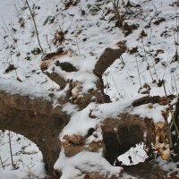 Белочка или кролик,кто кого увидит... :: Лидия (naum.lidiya)
