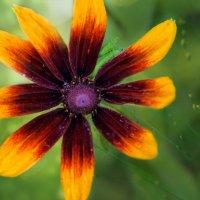 Цветок :: Ирина Гавриличева