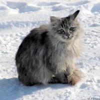 Брат, я ведь не замерзну этой зимою, правда?.. :: Андрей Заломленков