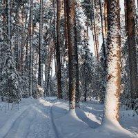 Утихло снегопадное ненастье... :: Лесо-Вед (Баранов)