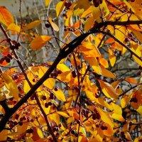 Осень... :: Владимир Бровко