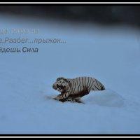 Зимняя Охота :: Aleksandr Ivanov67 Иванов