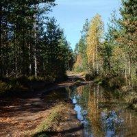 Лес после дождя. :: Елена Михайлова .