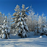 Солнечный зимний день :: Leonid Rutov