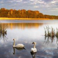 Озеро с лебедями :: Андрей Николаевич Незнанов