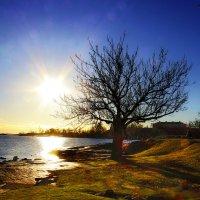 Просто дерево у просто моря :: M Marikfoto