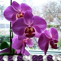 Орхидеи :: Nina Yudicheva