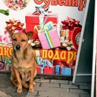 Возьмите в подарок... без упаковки! :: Владимир Болдырев