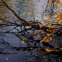Осень... :: Ира Егорова :)))