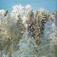 Морозным днем :: Виктор Заморков