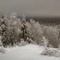 Долгожданная зима :: Сергей Компаниец