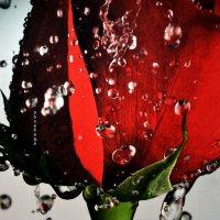 красивая нежность воды :: Роза Бара
