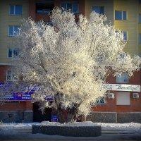 Принарядился . :: Мила Бовкун