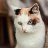кошка :: Екатерина Панфилова