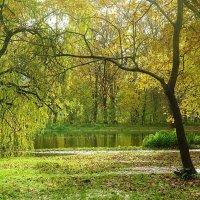 Парк Южный в ноябре :: Маргарита Батырева