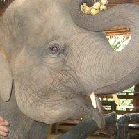 Слонёнок :: ЕЛЕНА СОКОЛЬНИКОВА