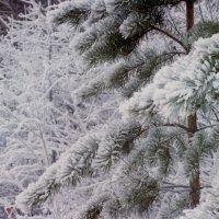 Зимний лес :: Алексей Rus