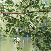 Летом на реке :: Александр Титков