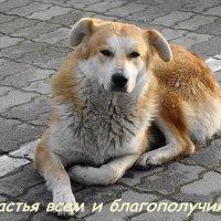 С Наступающим Новым Годом! :: Маргарита Батырева