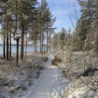 Наш волшебный лес :: Ольга