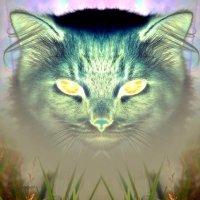 Улыбка Чеширского кота :: Сергей Шаврин