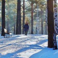 Прогулка по зимнему лесу :: Анатолий Иргл