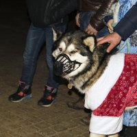 Собачий Дед Мороз. :: Анатолий. Chesnavik.