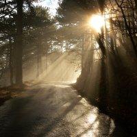 Волшебный лес :: Елизавета Авлахова