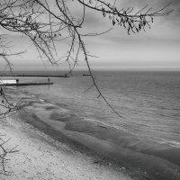 Январское море. :: Елена Данько