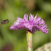 Из жизни насекомых :: leo yagonen