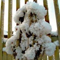 Вместо снежной бабы:). :: Farin Алёна