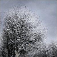 Зимний день :: Цветков Виктор Васильевич