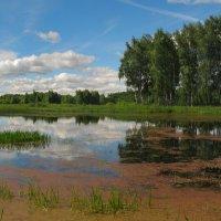 Лесное озеро. :: Oleg S