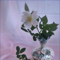 Шиповник в розовых тонах :: Нина Корешкова