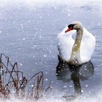 """А белый лебедь на пруду..."" :: Nina Yudicheva"