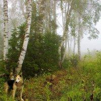 Утренняя прогулка в лес :: Сергей Чиняев