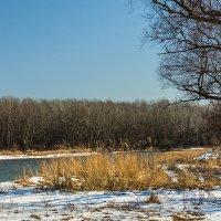Река Кубань зимой :: Игорь Сикорский