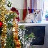 Первый Новый год :: Владимир Ростовский