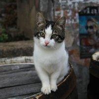 Алуштинский кот :: Катя Чупахина