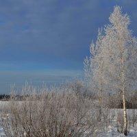 Зимние картинки :: Вера Андреева