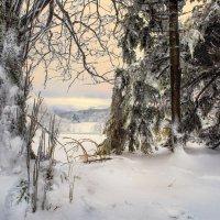 Зимой  в лесу..., остановись .......... :: Olga Ger
